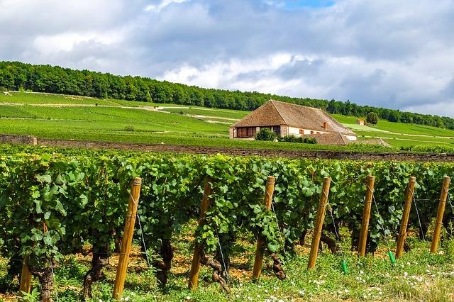 15 meilleures activités à Chalon-sur-Saône (en 2021)